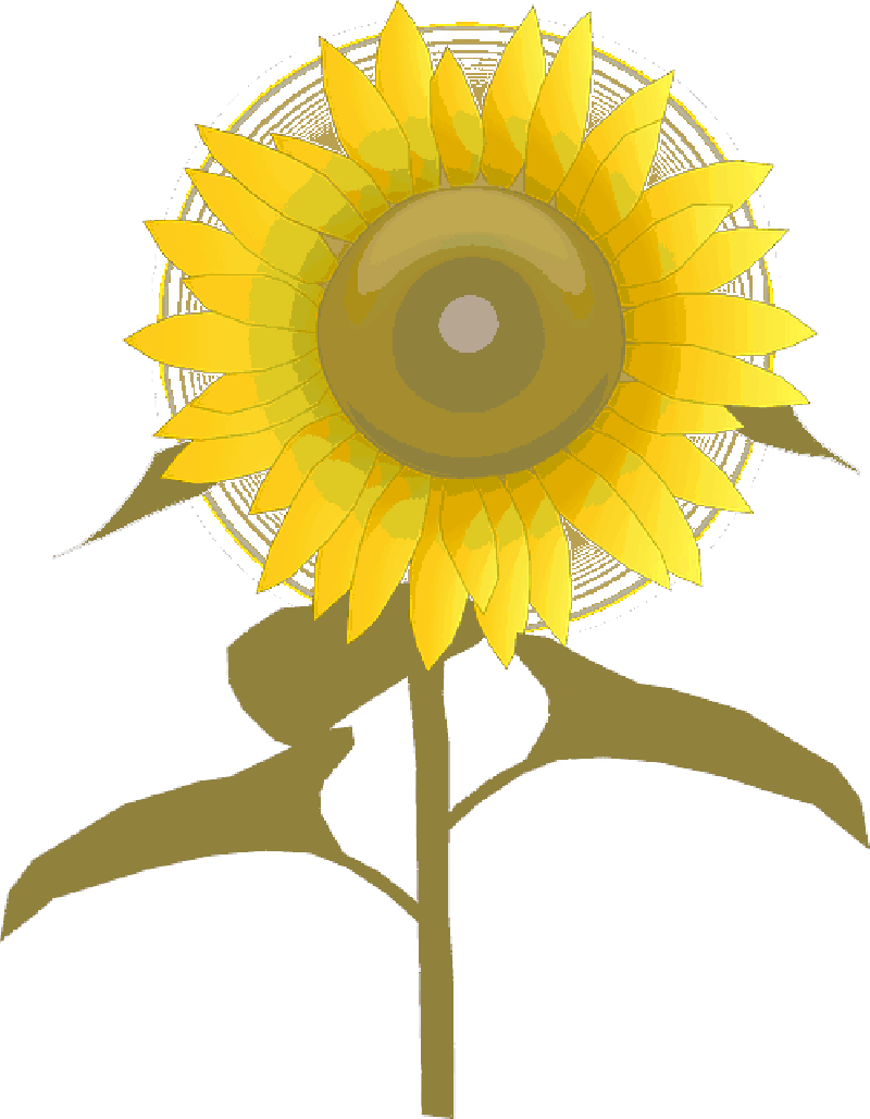 800x1028 Sunlight Plants Clipart. Did You Know Clip Art Vector Of Plant