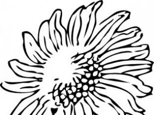 310x233 Sunflower Border Clip Art Free Vectors Ui Download
