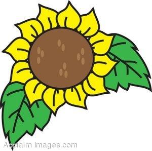300x298 Clip Art Illustration Of A Sunflower