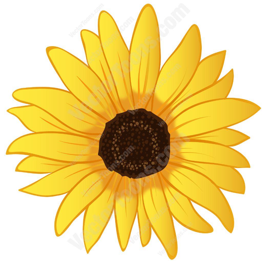 1023x1016 Sunflower Clipart Yellow Sunflower