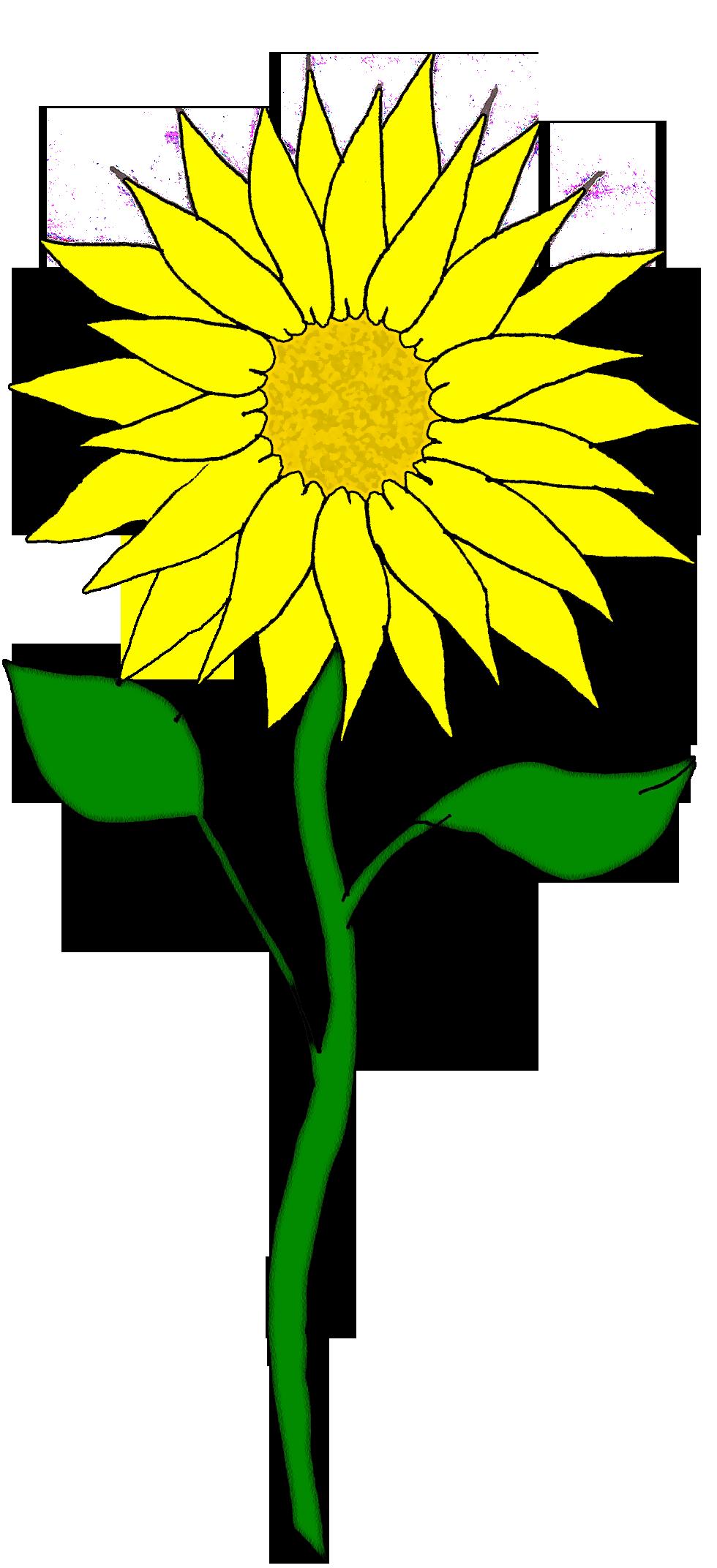 980x2144 Sunflower Clipart Yellow Sunflower