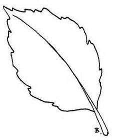 236x279 Sunflower Leaves (Leaf