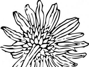 310x233 Sunflower Vector Clip Art Free Vectors Ui Download