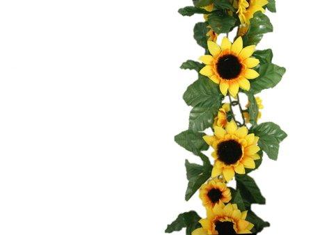 450x338 Sunflower Clipart Bottom Border