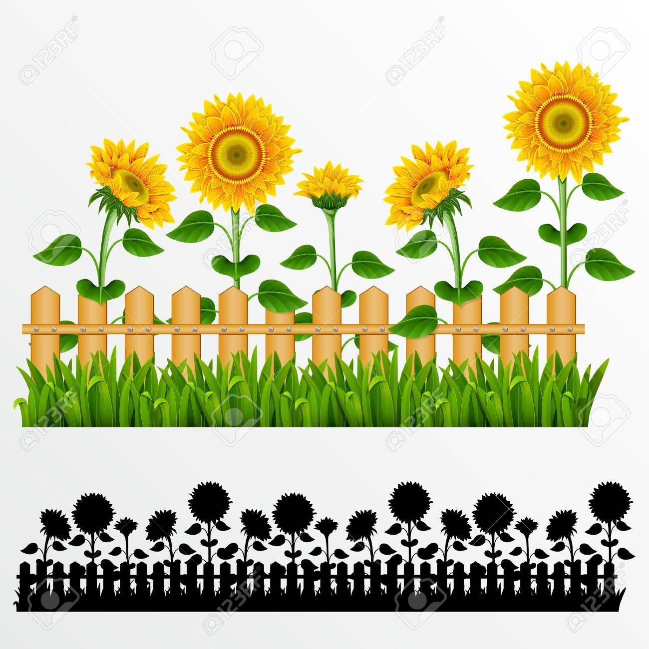 1300x1300 Sunflowers Clipart Border