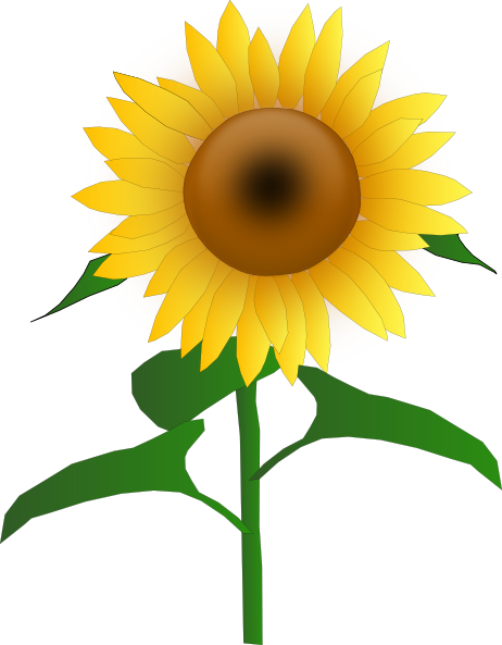 462x593 Free Sunflower Clipart Image