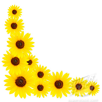 350x350 Sunflower Border Clipart