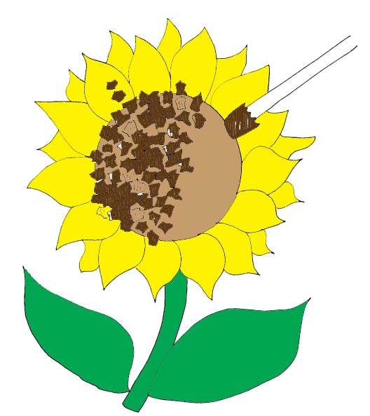 528x594 Sunflower School Cliparts 265018