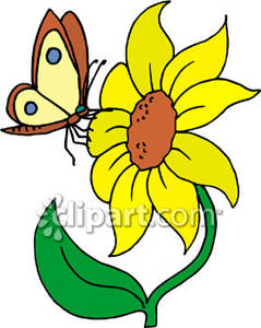 239x300 Sunflower And Butterfly Clip Art Butterfly On A Sunflower