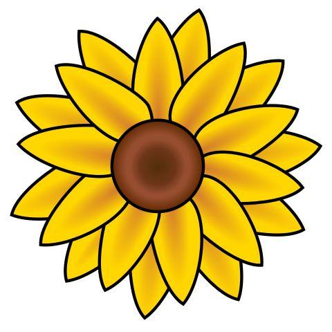 480x480 The Best Sunflower Clipart Ideas Sunflower