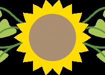 210x150 Clip Art Clip Art Of Sunflower