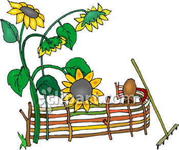 350x294 Clipart Picture Of Sunflowers Growing By A Fence