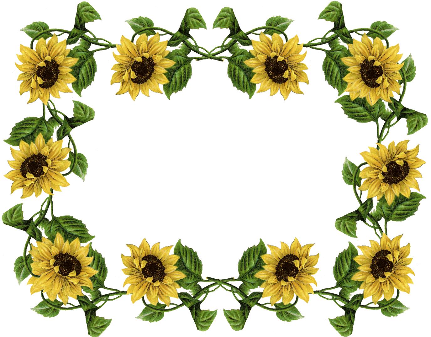 1375x1075 Sunflower Border Clipart