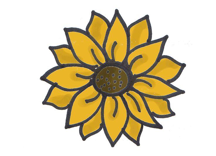 736x531 The Best Sunflower Drawing Ideas Sunflower