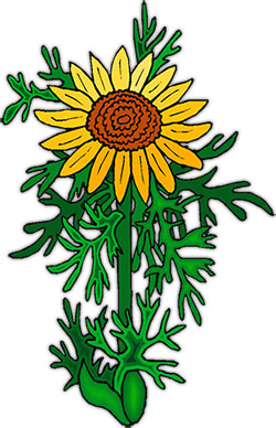 250x388 Plant Sunflower Clipart