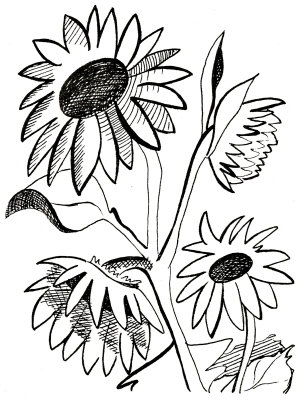 301x400 Sunflower Clipart Black And White