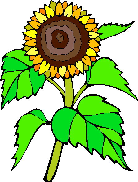 445x589 Sunflower Clip Art 2 Clipartix
