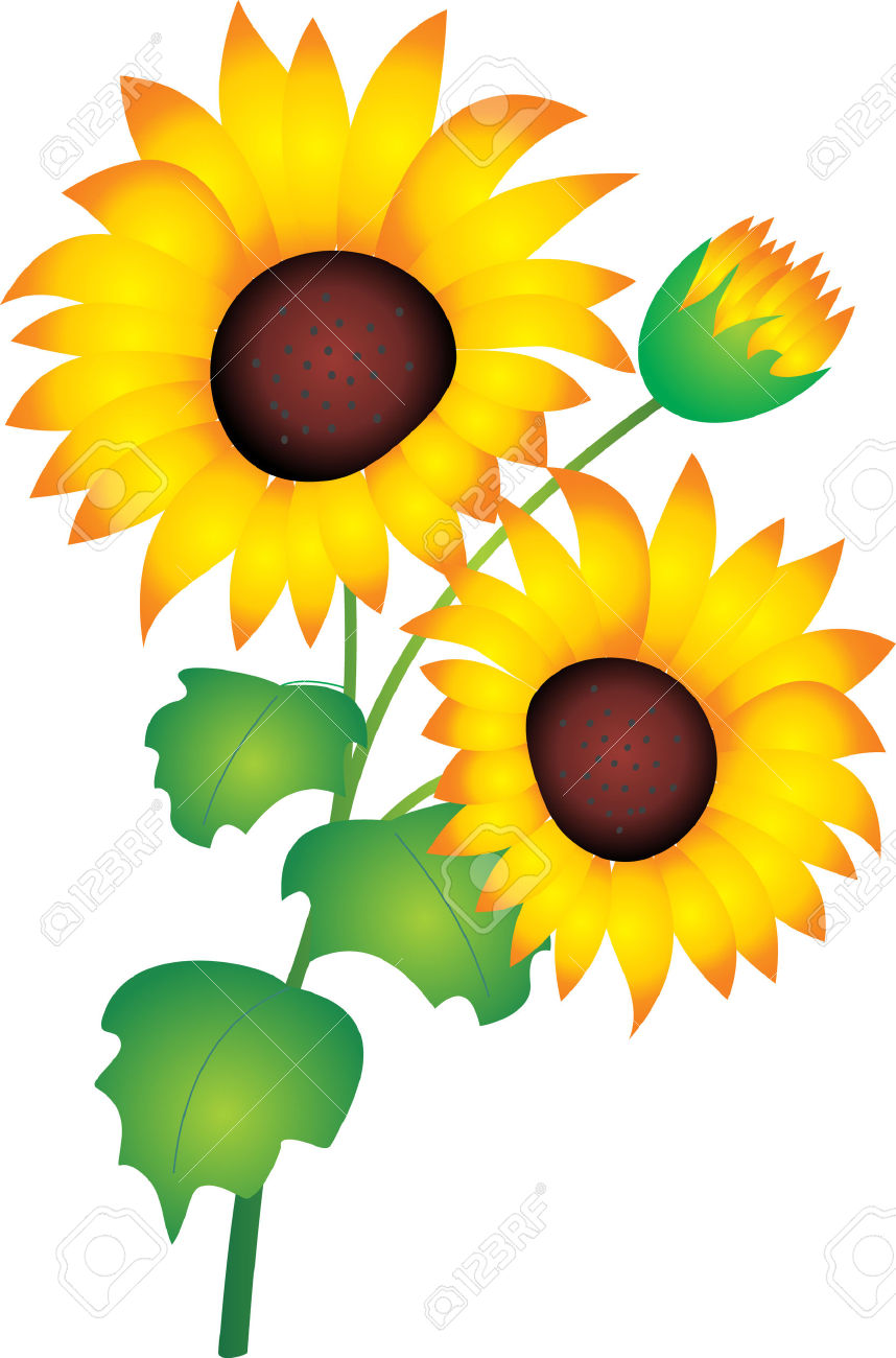 858x1300 Sunflower clipart bud