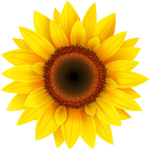 600x600 Best 25+ Sunflower clipart ideas Sunflower images
