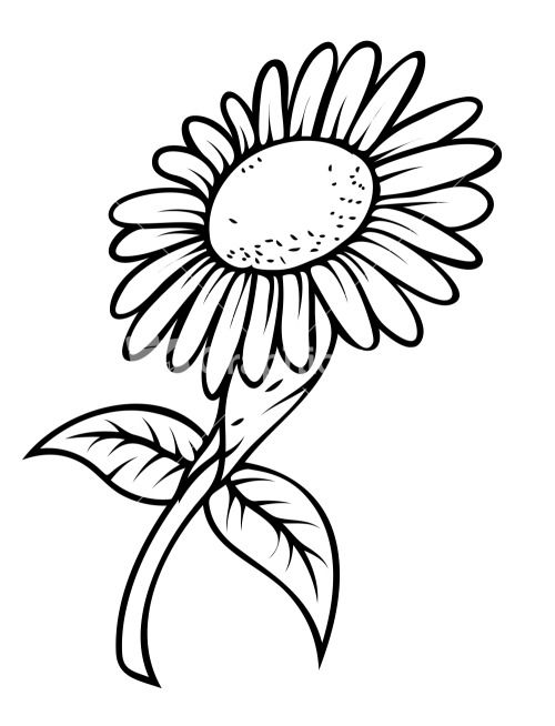500x654 Drawings Clipart