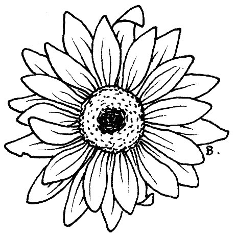 462x462 Gerbera Clipart Black And White