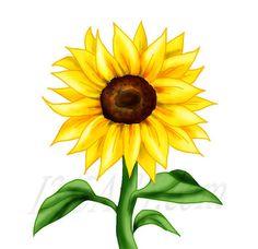 236x228 Sunflower Border Clip Art Sunflowers Clip Art Images Sunflowers