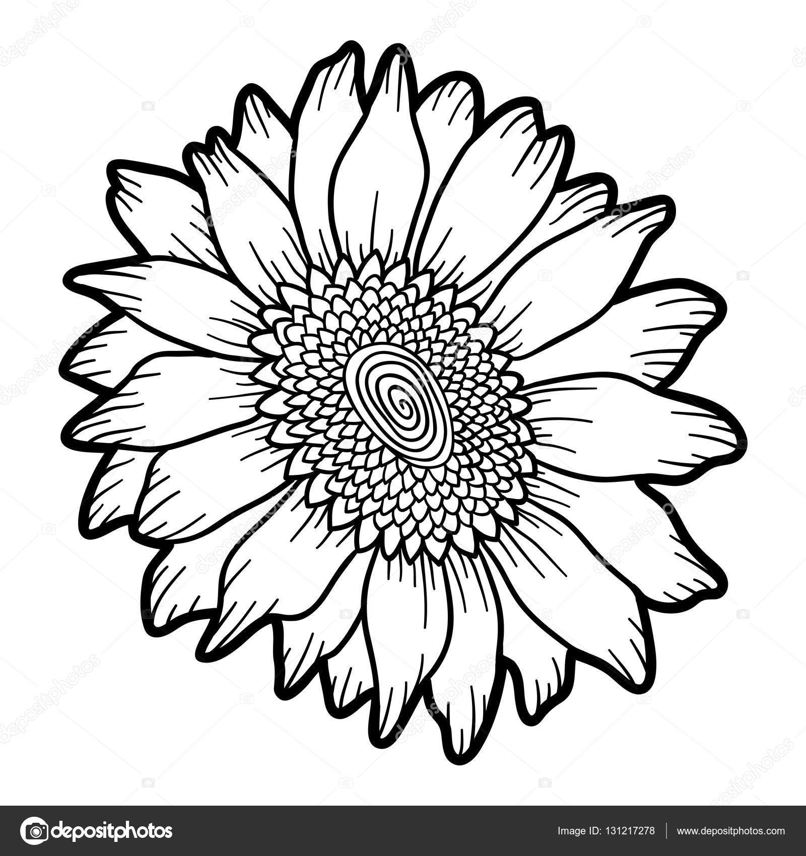 1600x1700 Coloring Book, Flower Sunflower Stock Vector Ksenya Savva