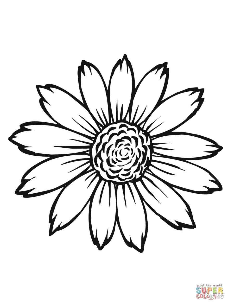 948x1264 Sunflower Drawing Template