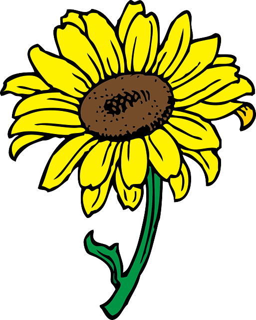 513x640 Black, Outline, Yellow, Drawing, Sun, Flower, White