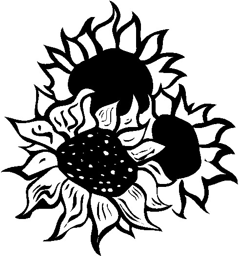 490x526 Black And White Sunflower Clip Art