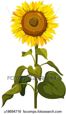 276x470 Clip Art Of Fragrant, Plant Life, Close Up, Flower, Nature, Plant