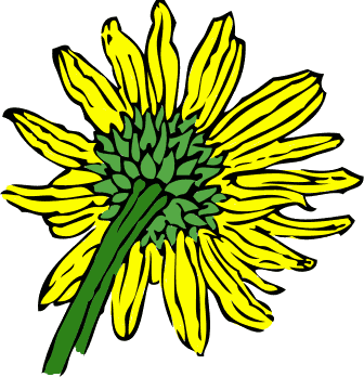 336x348 Free Sunflower Clipart
