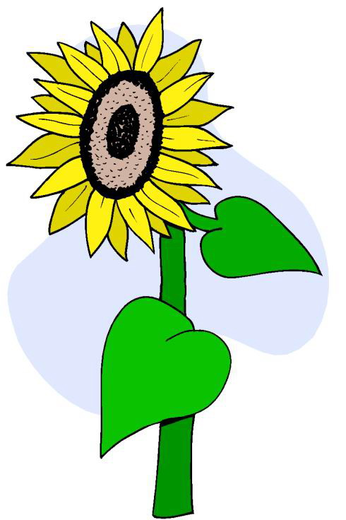 490x736 Sunflower Clip Art 5
