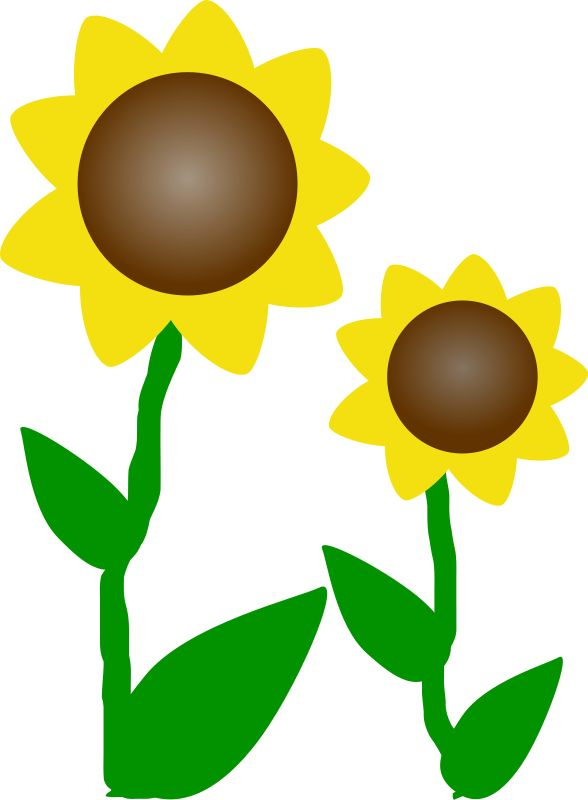 588x800 Sunflower Clipart Sun, Explore Pictures
