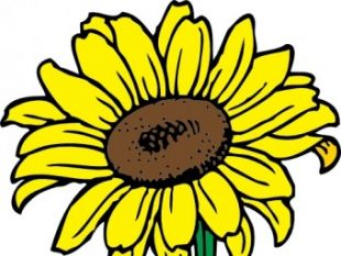 310x233 Back Of A Sunflower Clip Art Free Vectors Ui Download