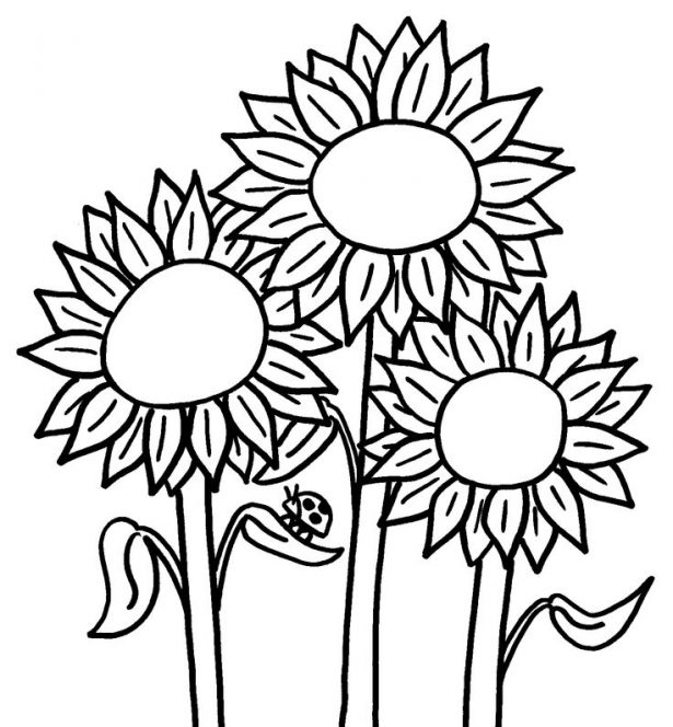 615x664 Nature Printable Sunflower Coloring Pages Sunflower Coloring