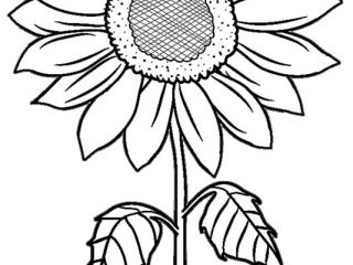 320x240 Printable Pictures Of Sunflowers Printable Sunflower Coloring