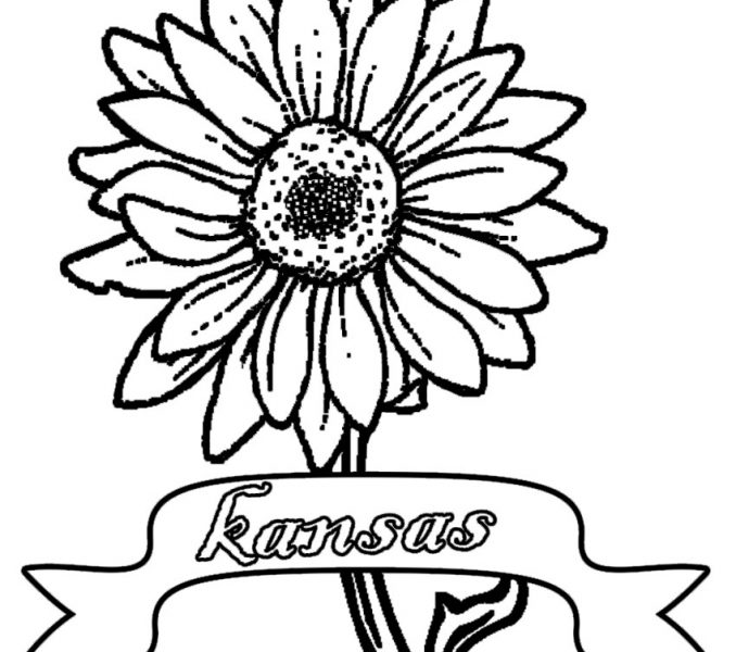 678x600 Sunflower Coloring Pages Best Coloring Pages