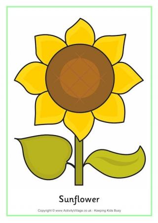 320x452 Sunflowers