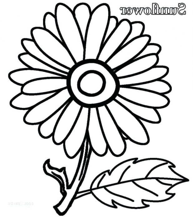 618x696 Coloring Glamorous Sunflower Coloring Page. Sunflower Coloring