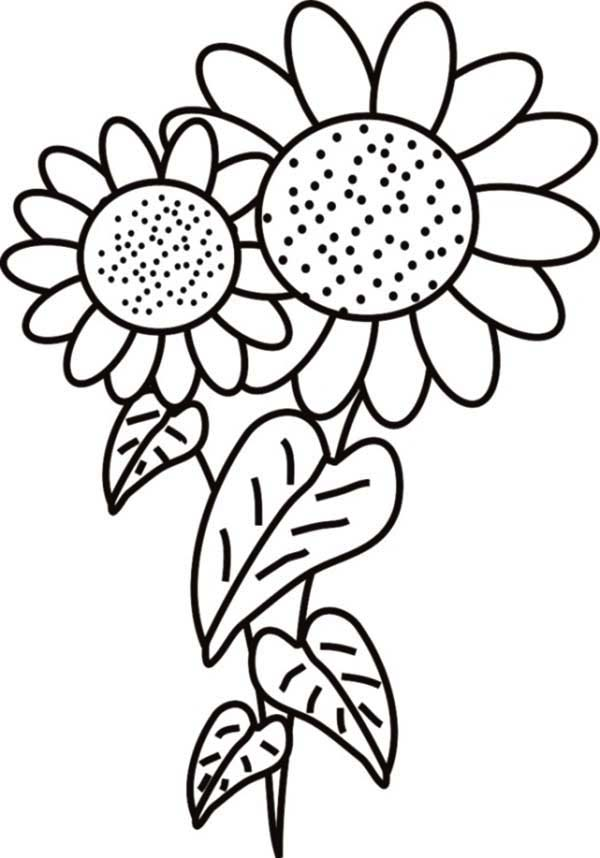 600x858 Fancy Sunflower Coloring Page