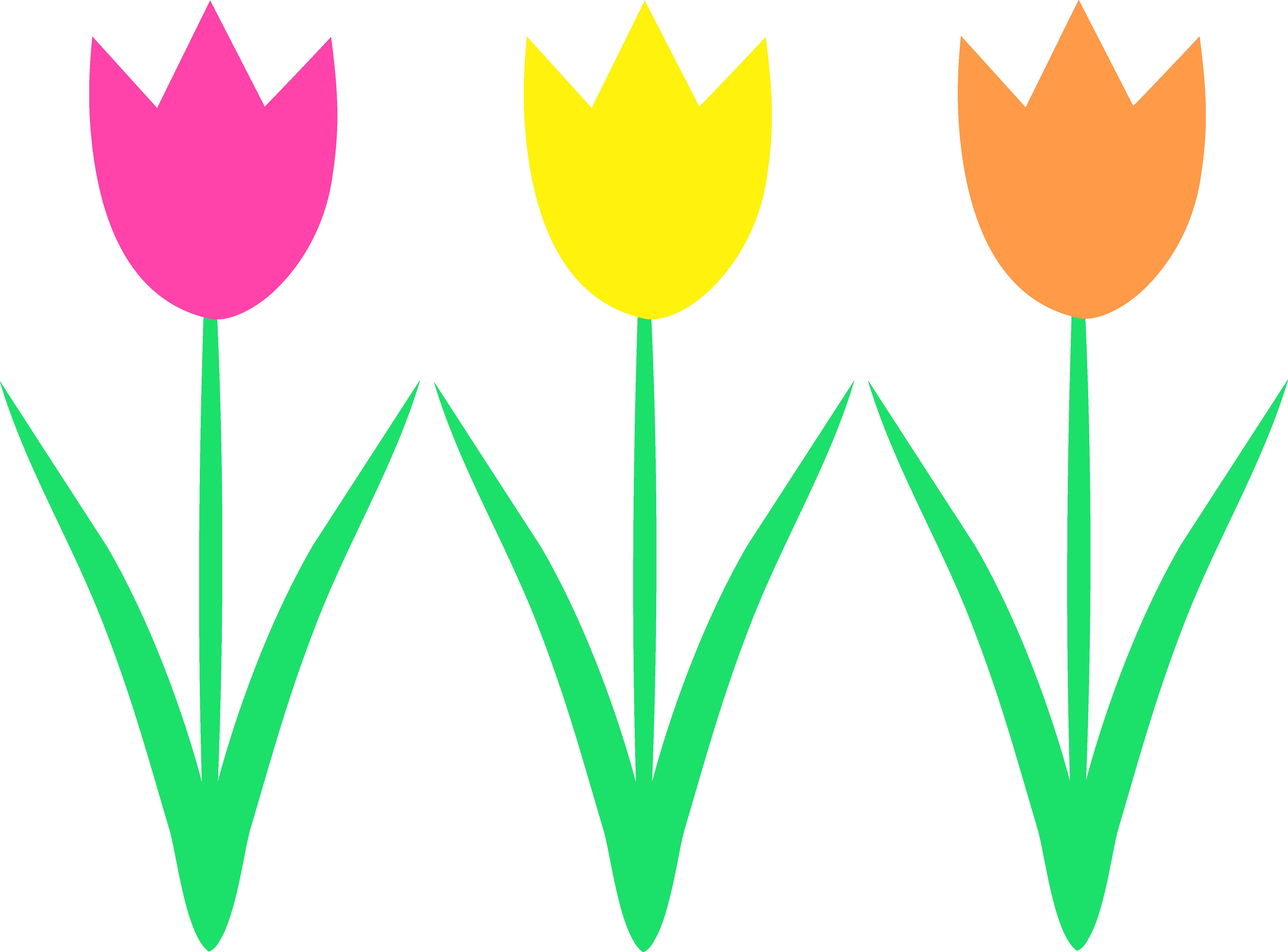 5627x4161 Top 57 Tulip Clip Art