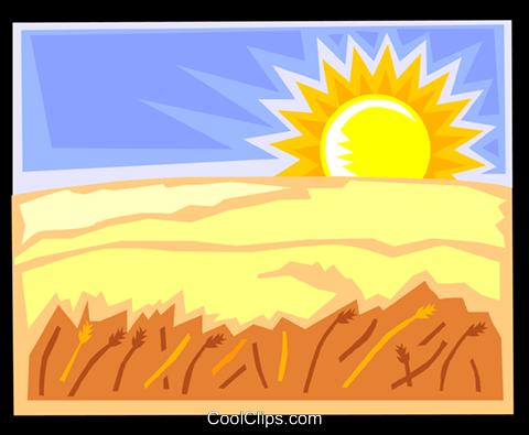 480x395 Sunset Over A Grain Field Royalty Free Vector Clip Art