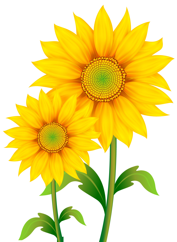 4504x6158 Sunflower Sunshine Clip Art Cliparts