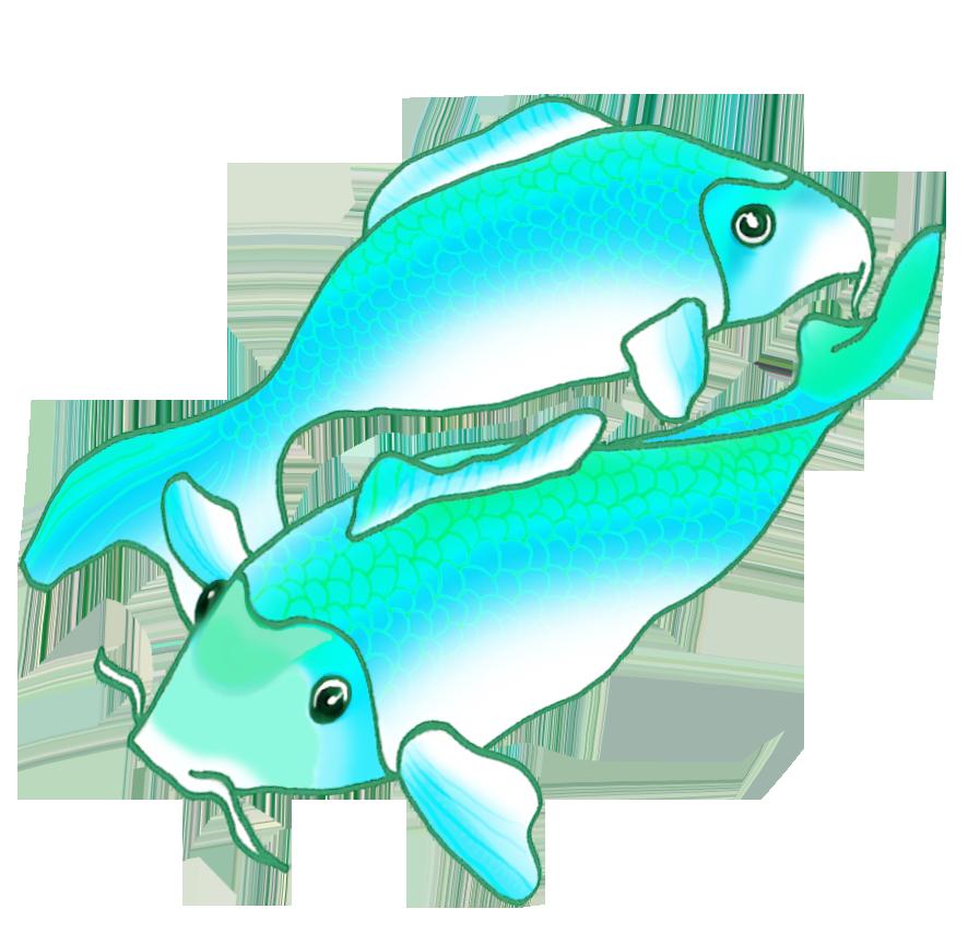 886x854 Colorful Koi Fish Drawings