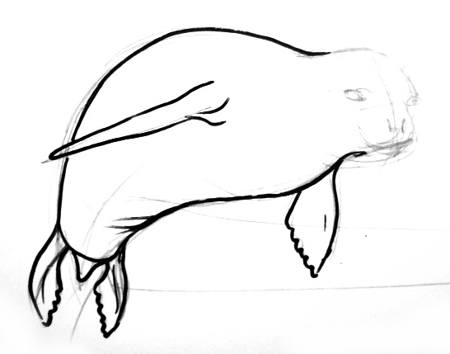 450x354 How To Draw A Seal