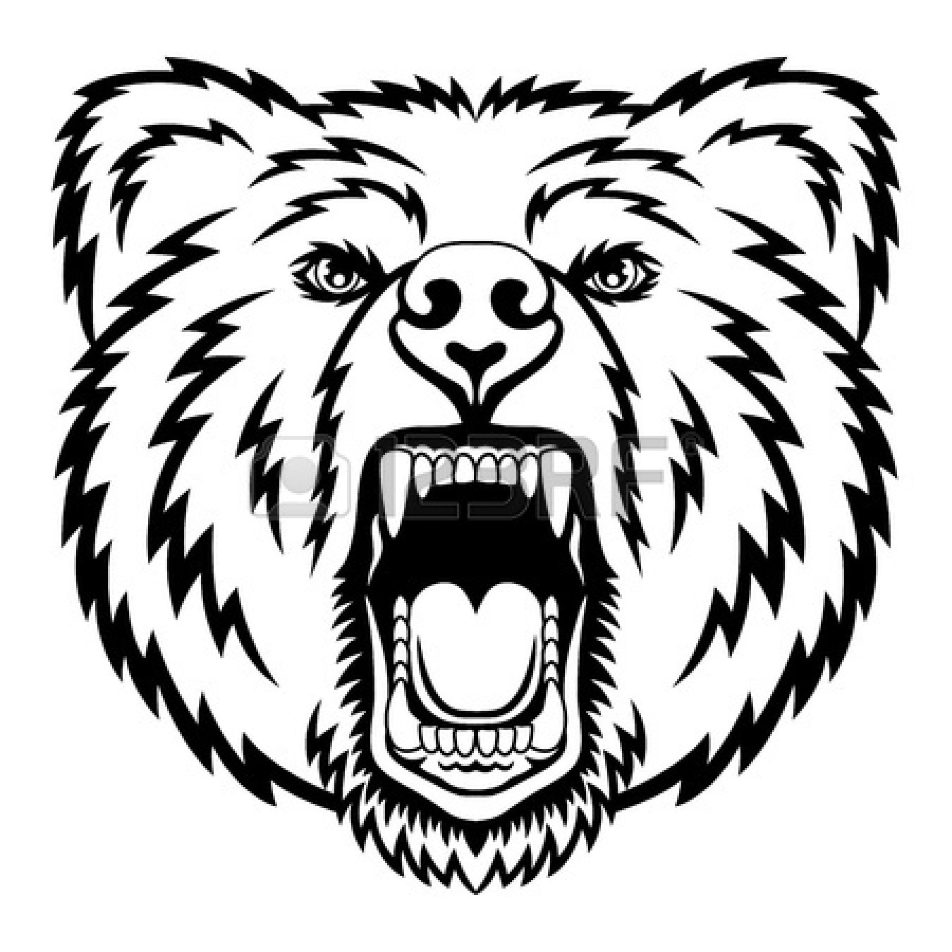 1350x1350 Drawing A Bear Face How To Draw Grizzly Bear Drawing Image Gallery