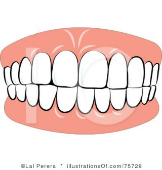 320x336 Teeth Clipart