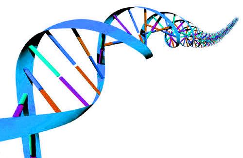 500x325 Genetic Testing Clip Art Cliparts