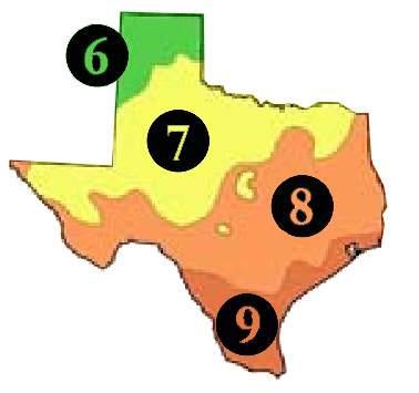 378x355 Buy Texas Trees Tx Shade Tree Sale Best Texas Fruit Tree